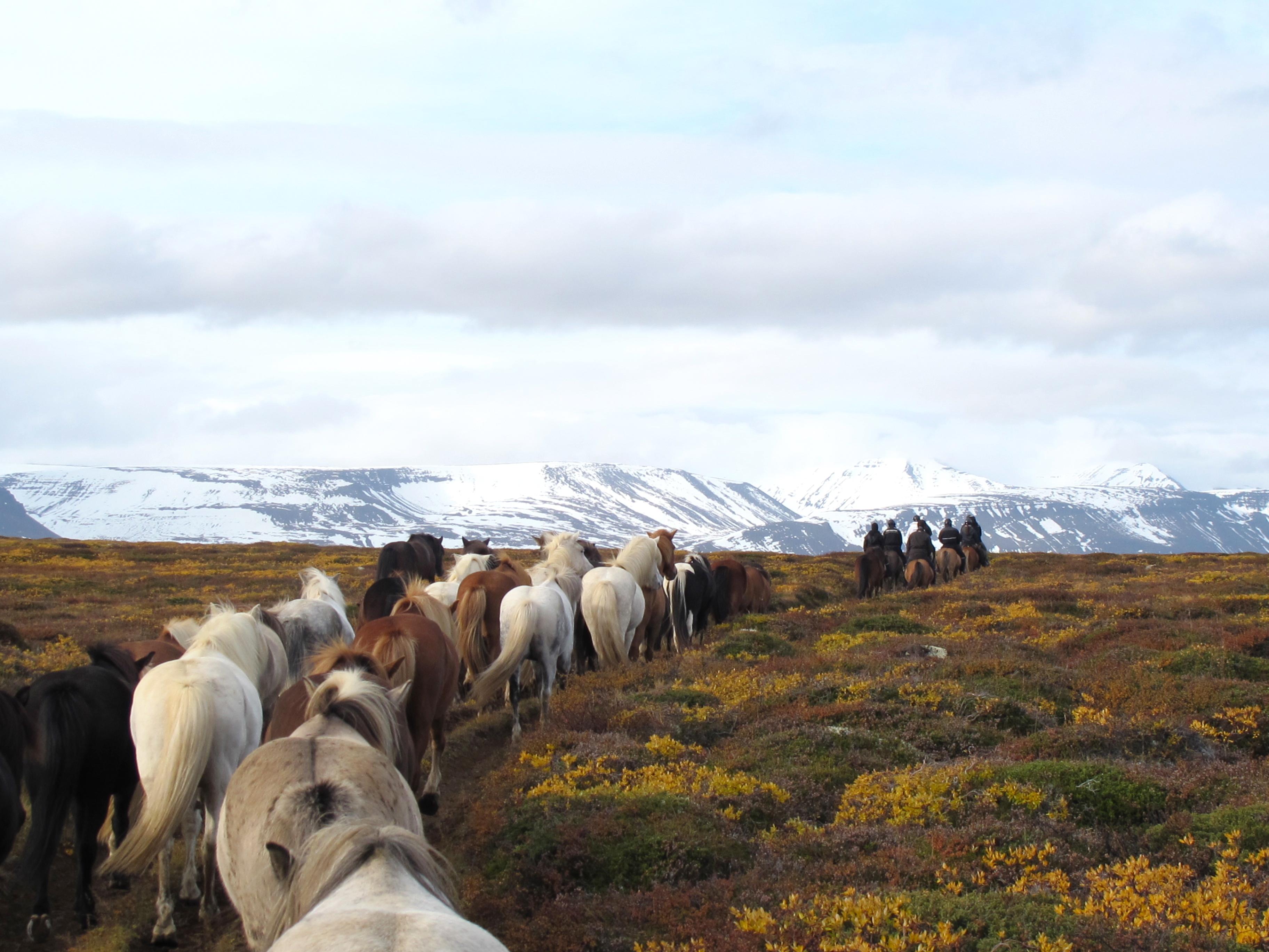 vinter island hest ridetur