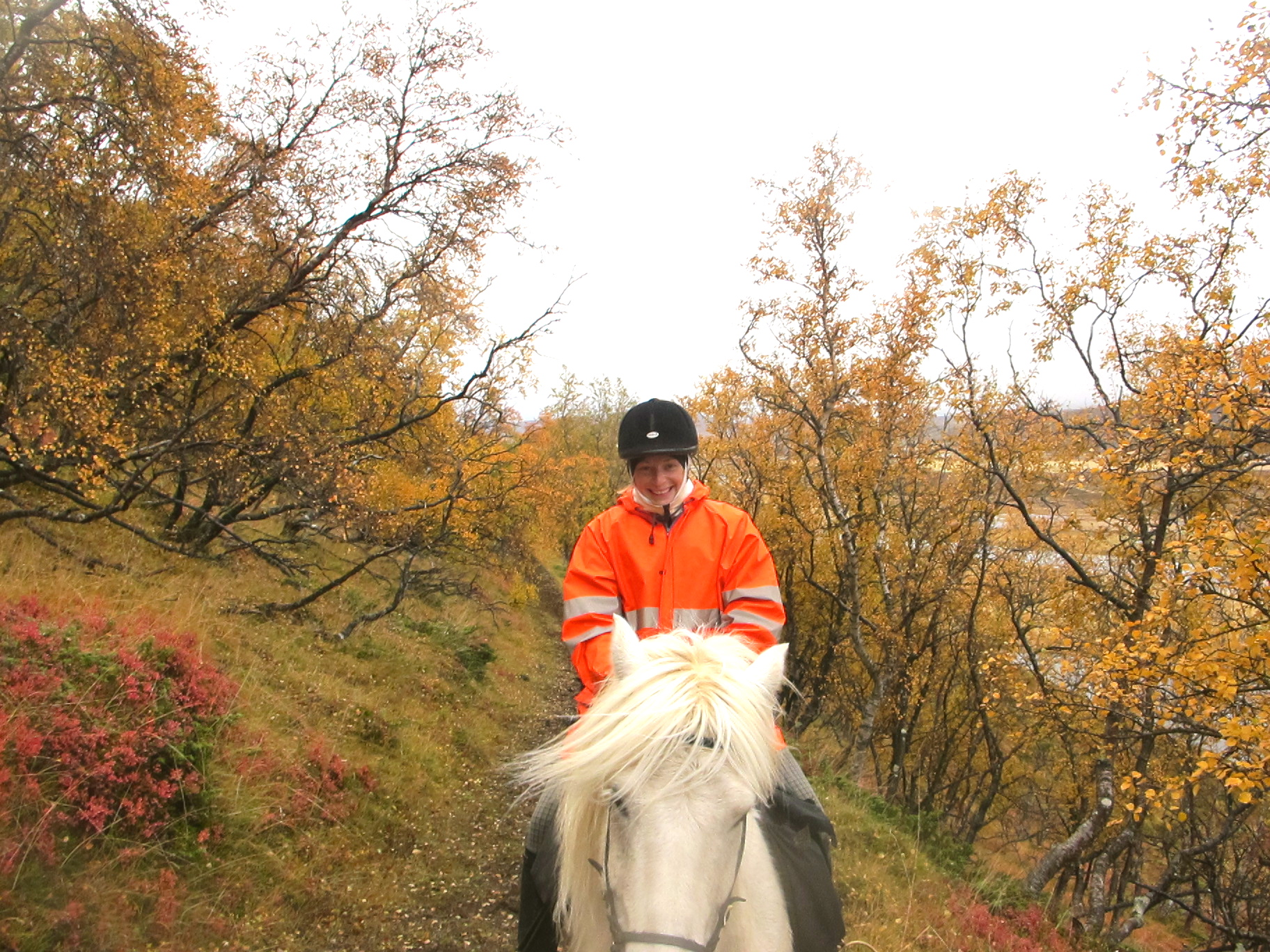 ridetur island hest