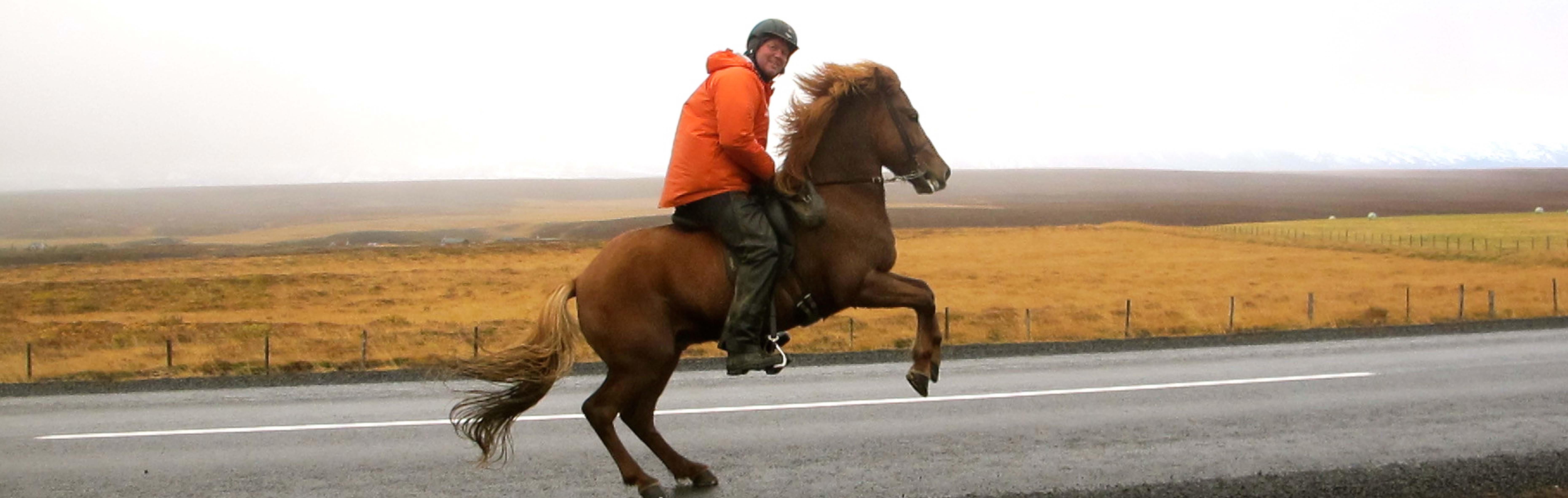 island hest ridetur