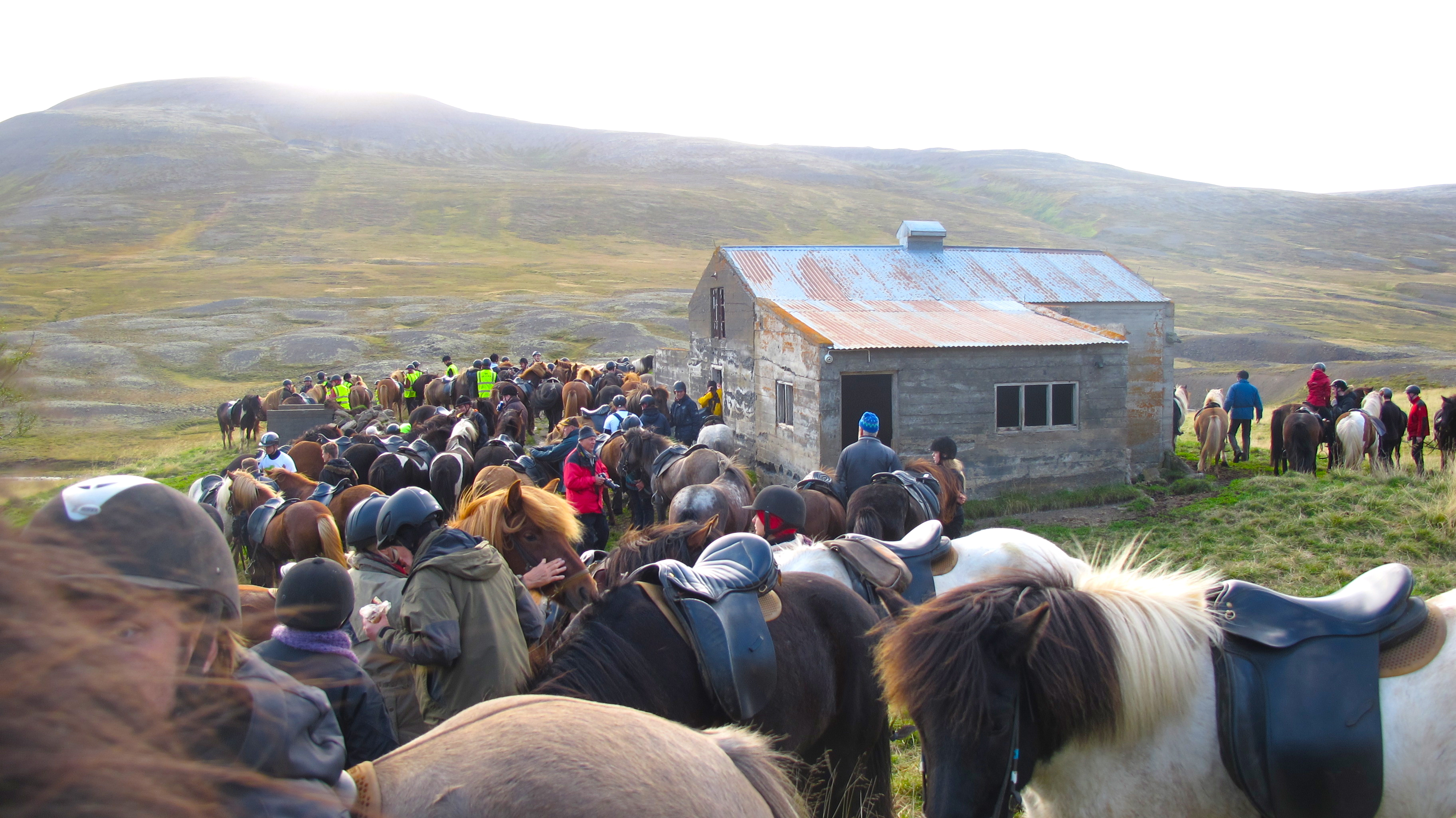 hest ridetur island hesteindsamling