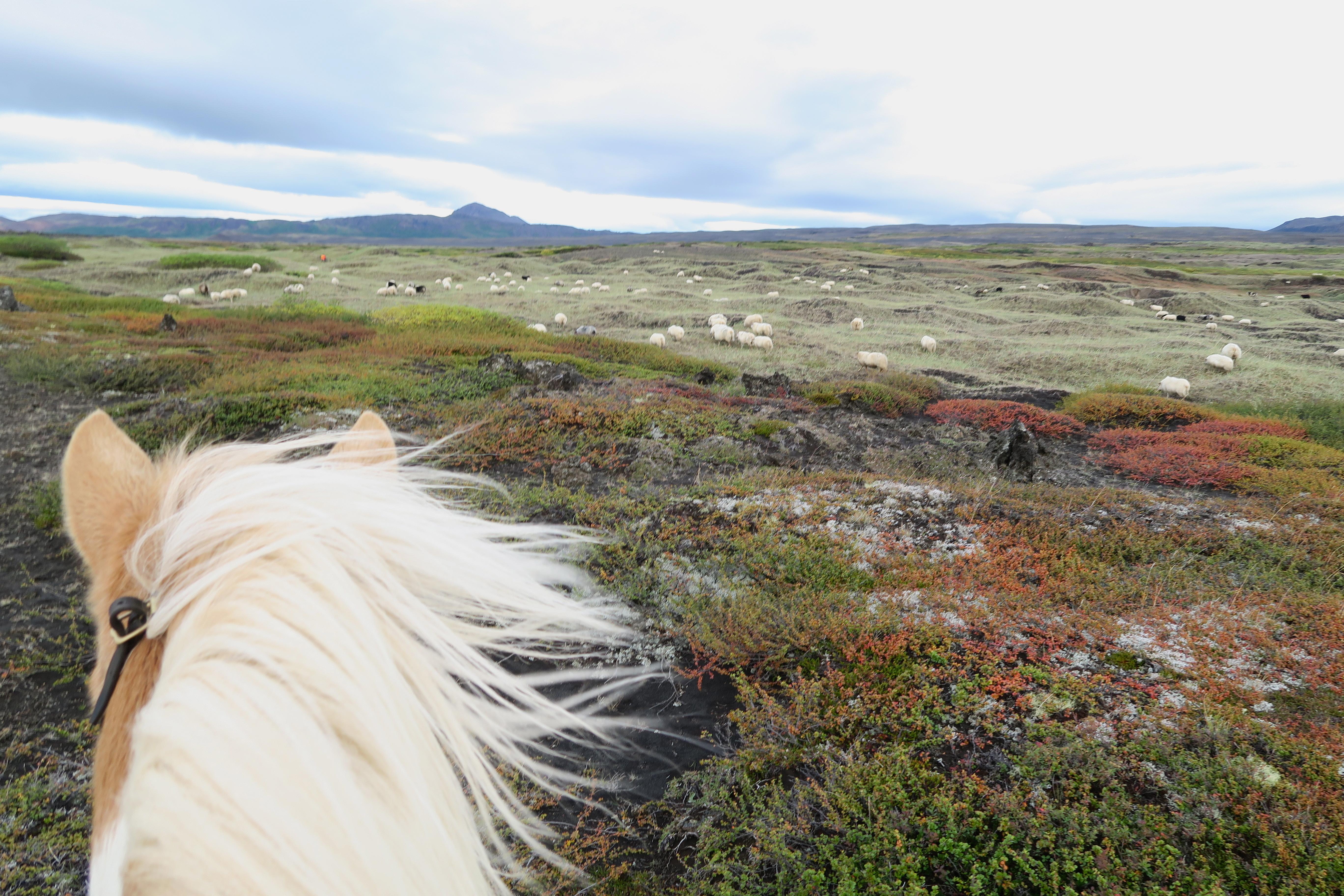 hest island ridetur
