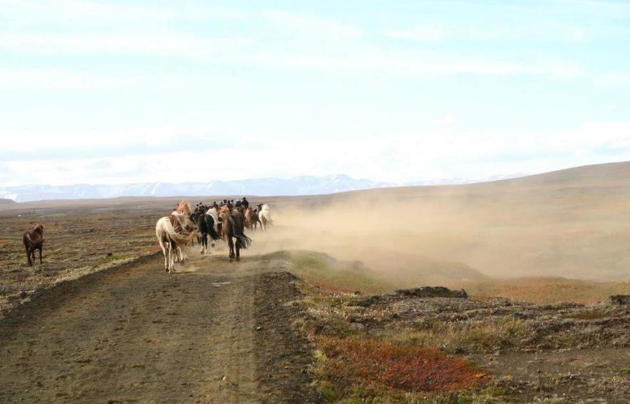 ridetur hest island
