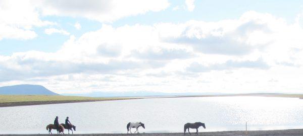 hest island ridetur iceland
